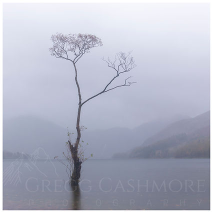 Buttermere Lone Tree during Storm Callum