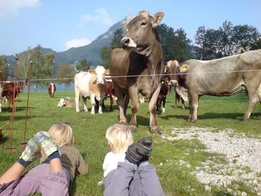 Kids&Cows.jpg
