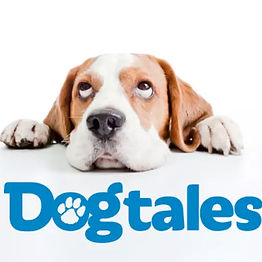 """Dogs are said to be man's best friend so is it a surprise that there's a weekly show dedicated to dogs and the people who love them? That's what """"Dog Tales"""" is all about. The show, aimed at teenagers, features information on dogs of all shapes, sizes and breeds while also informing young people on how to properly care for pets. It also provides safety, health and training tips that are useful for different breeds of dogs as well as emphasizing responsible pet ownership and compassion for all living creatures."""