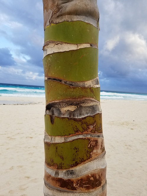 Cancun Sun & Surf #37 Palm Tree -Photography. Instant download for decoupage