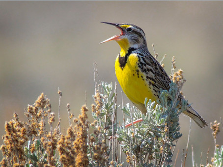 North America has lost nearly 3 billion birds in the last 50 years