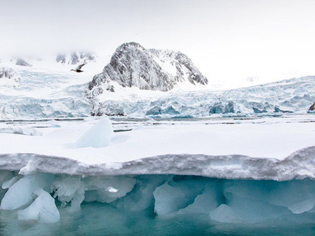 Arctic glaciers 'shrinking by 300m each year'