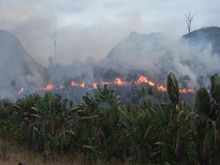 More fires burning in Central Africa than Amazon