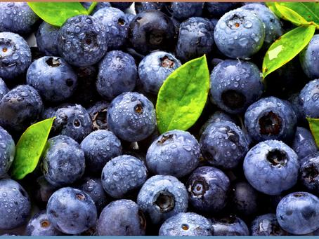 JMW Nutrition: Heidelbeere (Blaubeere)