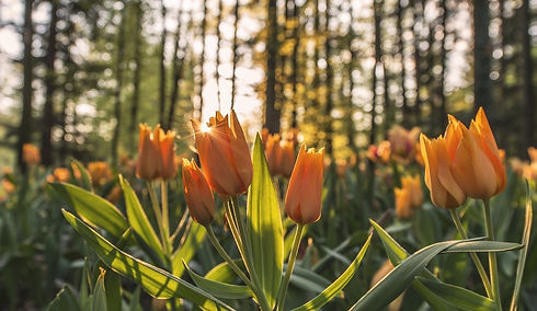 nature-768720_1280.jpg