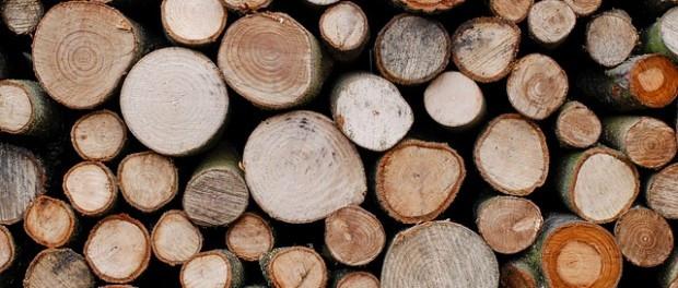 Plantation Timbers in Western Australia