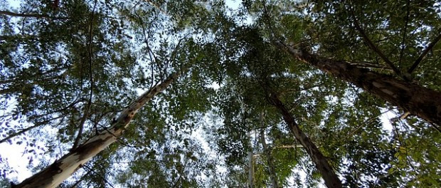 How We Ensure Western Australia Forests Are Managed Sustainably