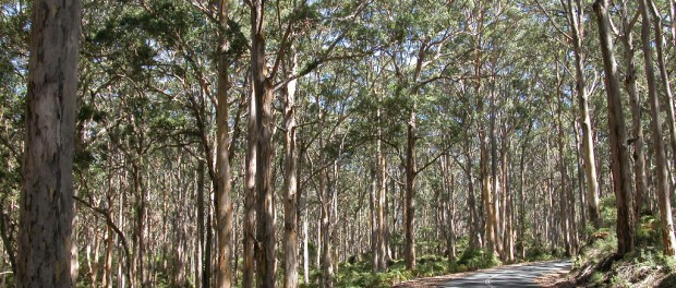 FPC WA Info Sheet: Fauna and Cuckatoo Surveys in the Karri Forest