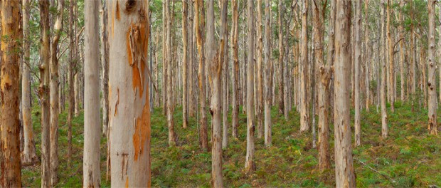 FPC: Management Plan For The Karri Forest
