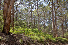 FPC WA Info Sheet: Management of Old-Growth Forest