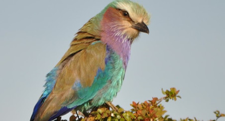 stunning bird wildlife in Africa