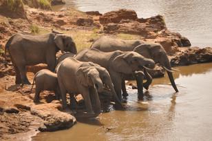 stunning wildlife in Africa