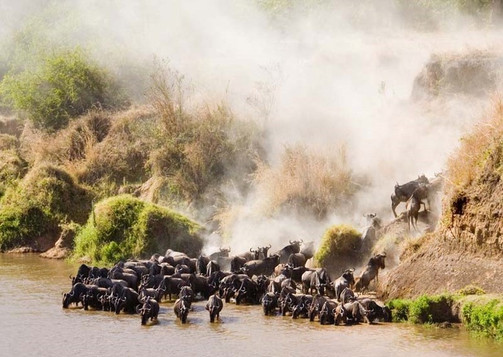 exotic wildlife and stunning views in Africa