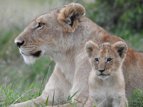 incredible African wildlife