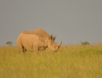 exotic wildlife in stunning African landscapes
