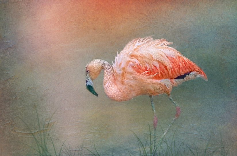 COLOUR - Flamingo Stroll by Laurie Campbell (15 marks)