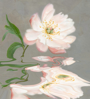 'Peony Dance' by Laurie  Campbell - Accepted