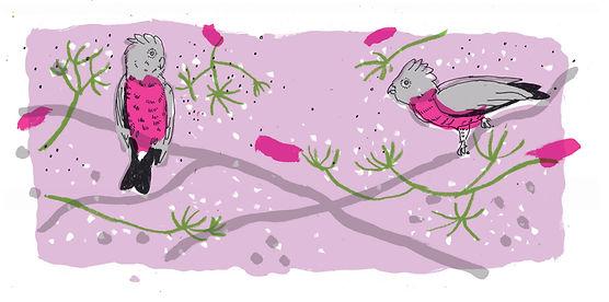 elderflower lable copy.jpg