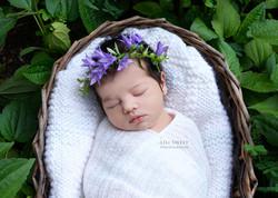 lili sweet photography