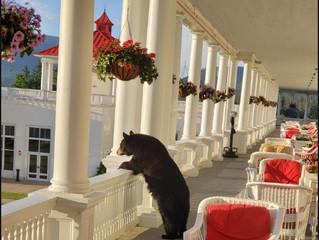 Bretton Woods Marathon 2020