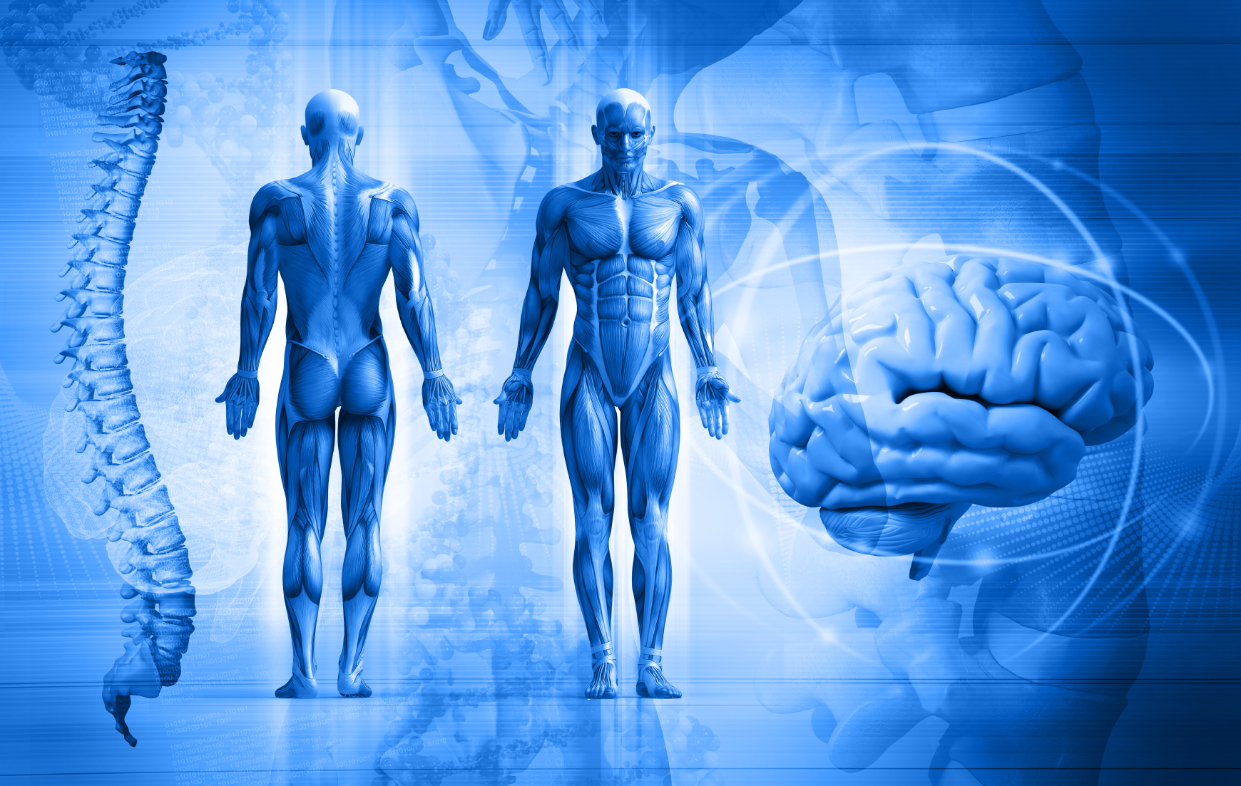 Chiropractic and human body