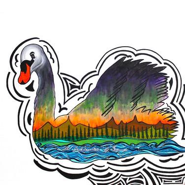 A Celebration of Swans