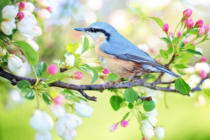 spring-bird-2295431_960_720.jpg
