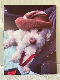 Canvas Printing_puppy Hat.jpg
