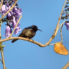 bird Adam Sela