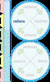homeostasis-illustr-water-17.png