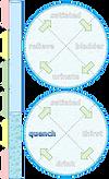 homeostasis-illustr-water-07.png