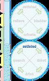 homeostasis-illustr-water-09.png