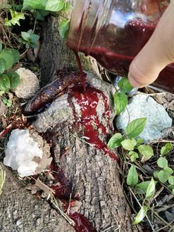 blood on maple.jpg