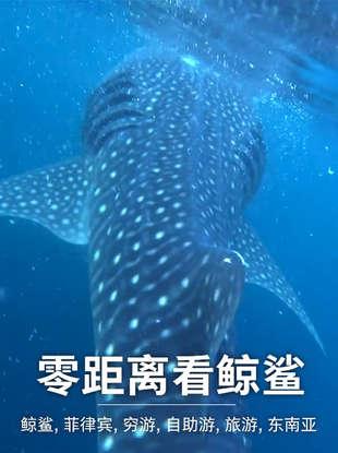 零距离看鲸鲨