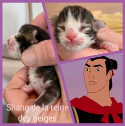Shang De La Reine Des Neiges