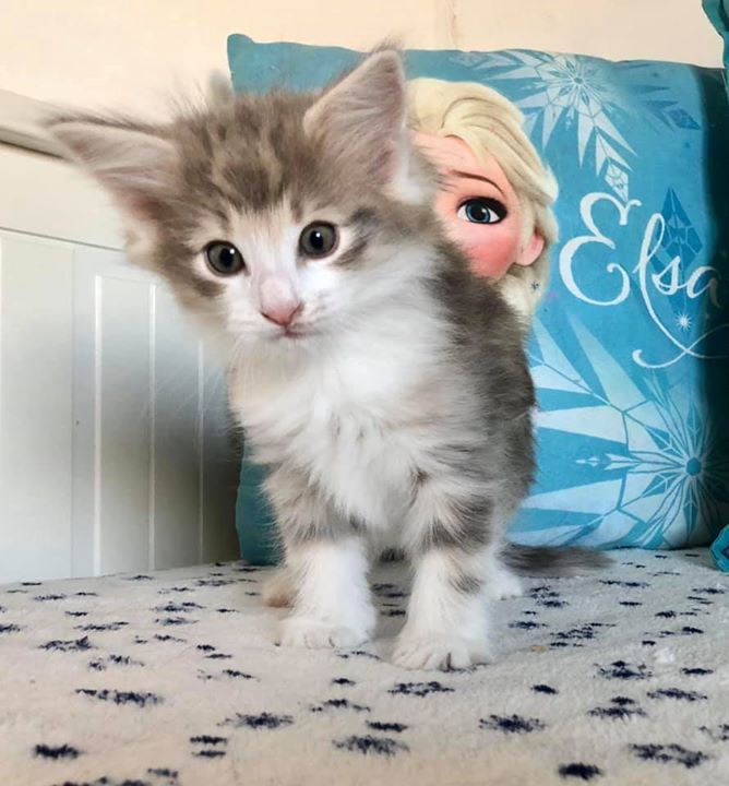 Princesse Freya