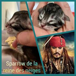 Sparrow De La Reine Des Neiges