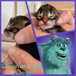 Sullivan De La Reine Des Neiges