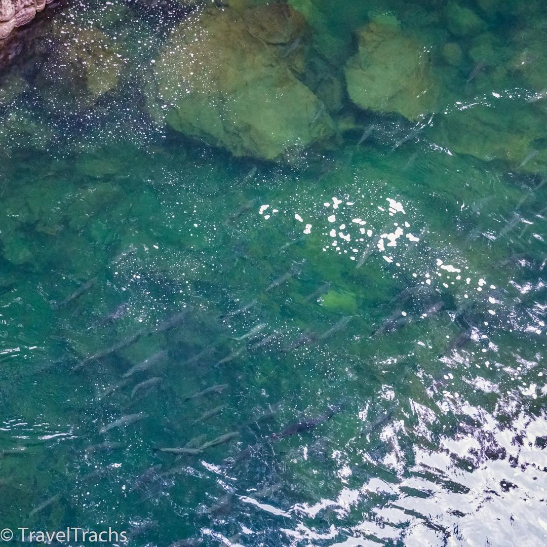 Salmon Pool