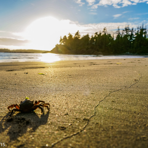 The crabs enjoy the sunset, too.