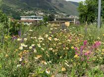 Parco dei Poeti, Ascona