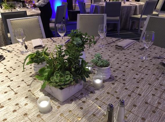 White Vase Grouping w Succulents 6.JPG
