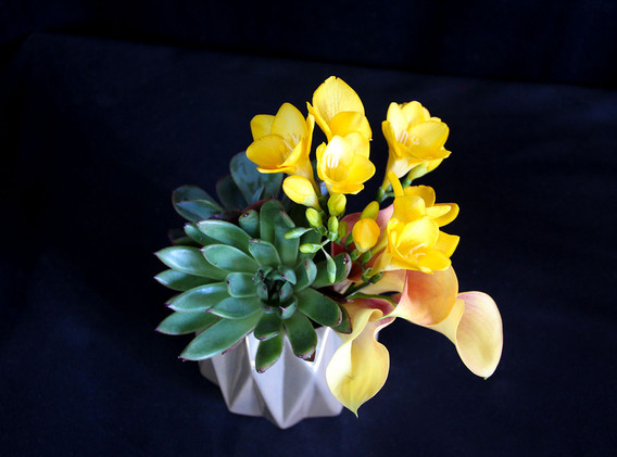 Yellow Calla Lilly and Succulent in Geom