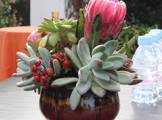 Succulents and Lotus.JPG