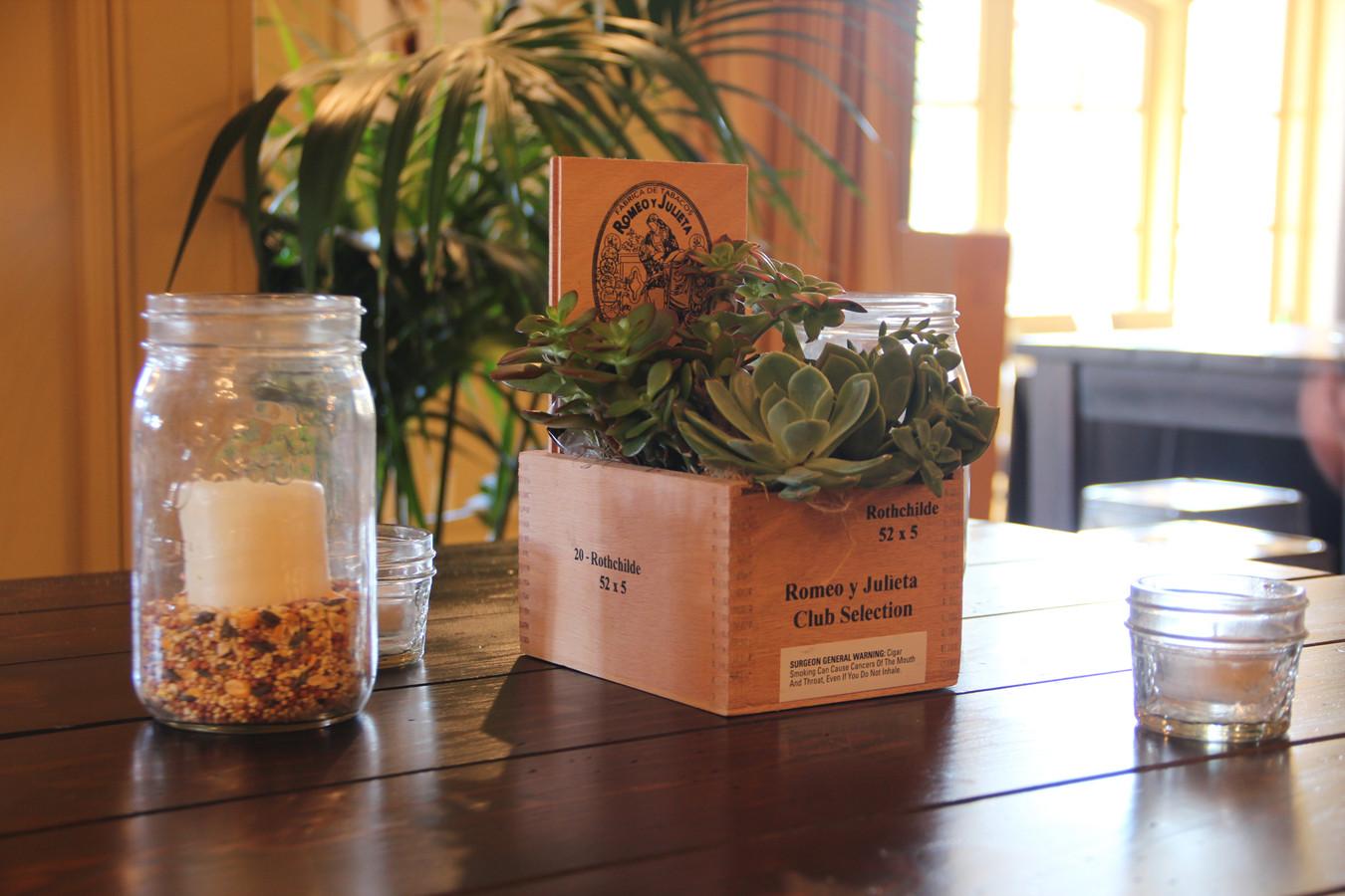 Cigar Box Succulent 1.jpg