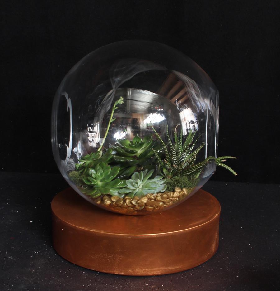 Succulents in Terrarium 1.jpg