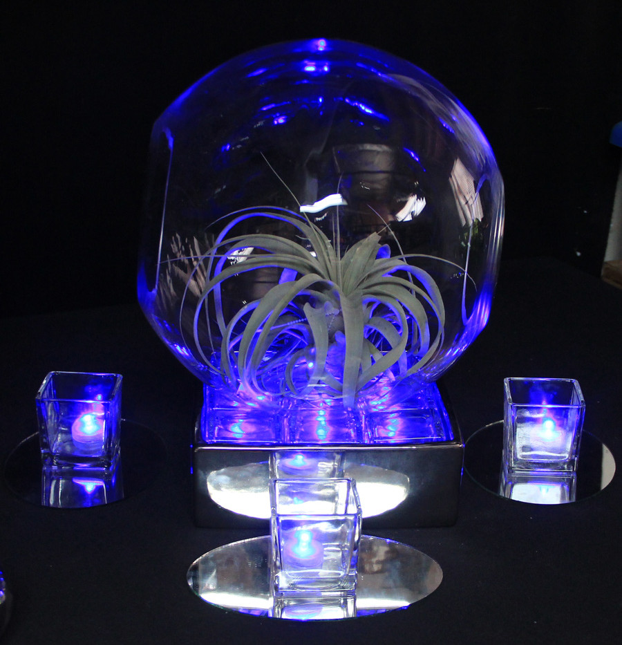 Modern Terrarium on Led Glass in Mirrior