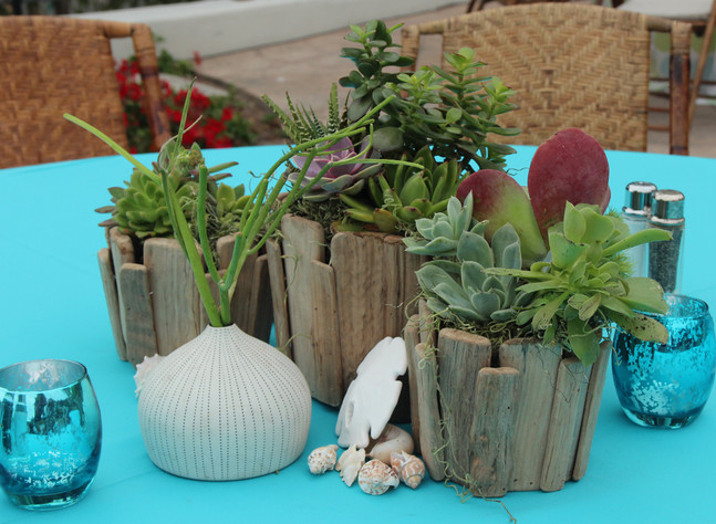 Beach Wood and Succulents Grouping 1 .jp