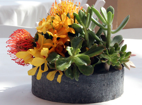 Color Accents w Succulents in Stone Cont