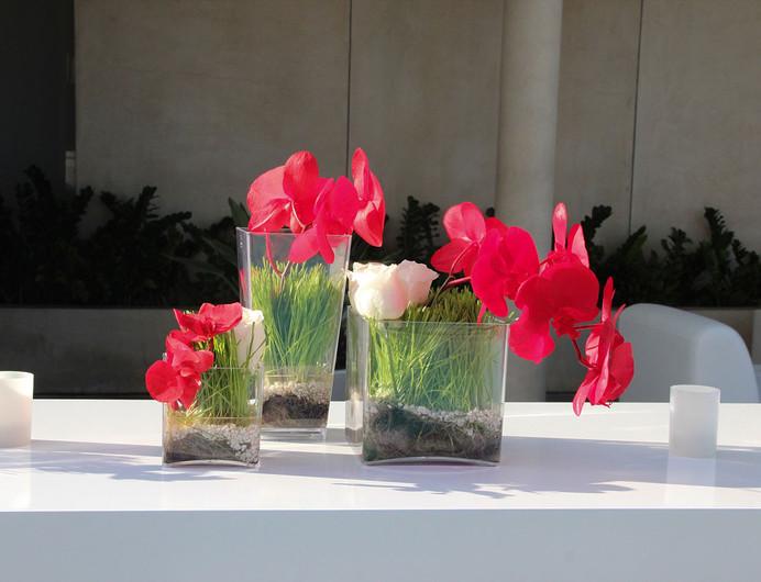 Modern Red White Wheatgrass.jpg